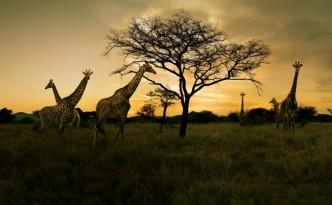 Voyage-afrique-du-sud
